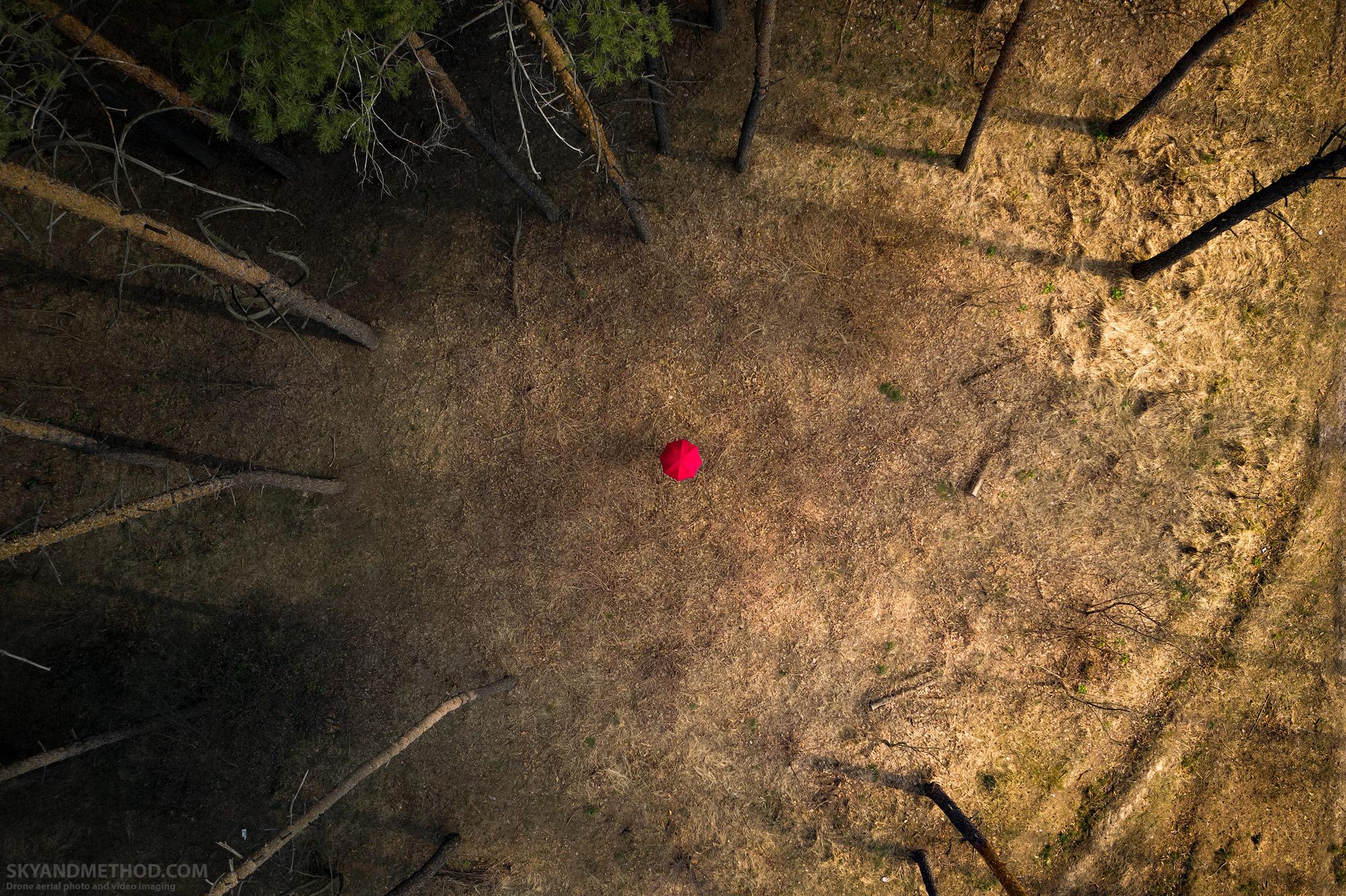 В тёмном лесу